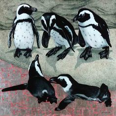 African Penguins, Oil and Silver Leaf on Canvas, 100cm by 100cm, (2015) by Marc Alexander