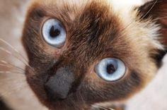 COLETTE - Gato adoptado - AsoKa el Grande