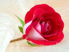 Most beautiful flowers of valentine's day presents . Gifts including flowers, candy, lingerie, jewelry along with other romantic items are quite common