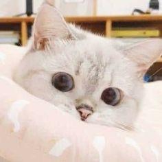 Cute Cat Memes, Funny Cute Cats, Cute Baby Cats, Cute Funny Animals, Cute Baby Animals, Kittens Cutest, Cats And Kittens, Dumb Cats, Cute Cat Wallpaper