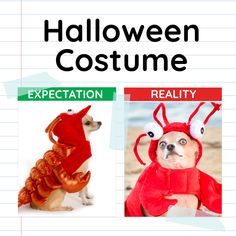 Maybe it's best if we keep our Halloween vision boards private. #halloween #costume #meme #relatable