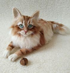 Artist Cat/ Collectible/ Needle Felted/Cutest playful Maine