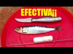 YouTube Fishing, Youtube, Ideas, Fishing Tricks, Gone Fishing, Fishing Tackle Shops, Knots, Bass Fishing, Peaches