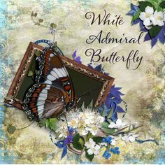 """White Admiral Butterfly. Created using """"Rhapsody"""" by Carena's Designs. #theStudio #digitalscrapbooking"""