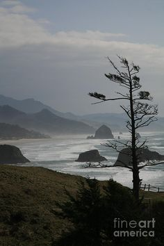 Cannon Beach, Oregon - I've been here and it was amazing!
