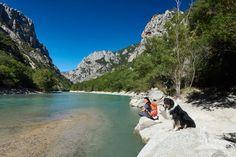 Urlaub mit Hund in der Provence