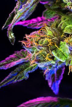 Grow Weed. Smoke Wee