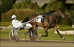 American Standardbred Horse Racing Greats