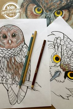 These owl coloring pages make a fun activity for both kids and adults. There are many feathers to color any shade you want, and you can even create your ow Coloring Pages, Elementary Activities, Family Activities (all ages), Kindergarten Activities animal coloring, animal coloring pages, Coloring Pages, Coloring Pages For Kids, facebook live video, Owl, owls, video