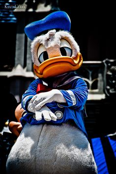 There is no messing with the DUCK! ~ Donald Duck