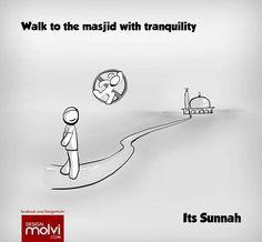 Sunnah                                                       …