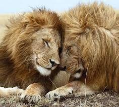 Resultado de imagen de abrazo animal