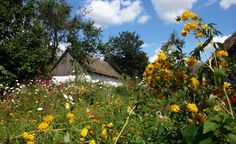Old Polish villages were surrounded by extensive gardens - photos from the skansen (folk museum) of Mazovian Countryside located in Sierpc, Poland © Bożena B.