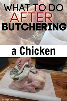 Are you going to butcher your own chickens? Check out what to do after you butcher a chicken and the process. It's not just about raising there is a whole process here and we show you in a post and a video. Raising Meat Chickens, Raising Backyard Chickens, Backyard Farming, Chicken Garden, Diy Chicken Coop, Urban Chickens, Mini Pigs, Building A Chicken Coop, Mini Farm