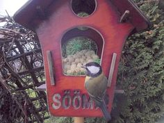 Linnukaamera: rasvatihane by Veeseire Bird Feeders, Outdoor Decor, Home Decor, Decoration Home, Room Decor, Home Interior Design, Home Decoration, Teacup Bird Feeders, Interior Design