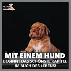 Mit einem Hund...