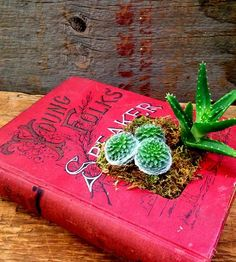 Upcycled Hardcover Book Planter, No. 5 by The Library Lab on Scoutmob Shoppe
