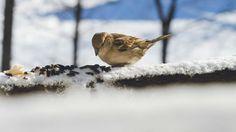 Jak przetrwać zimę, ważąc kilka gramów? Ptasie sposoby survivalu. http://tvnmeteo.tvn24.pl/informacje-pogoda/ciekawostki,49/jak-przetrwac-zime-wazac-kilka-gramow-ptasie-sposoby-survivalu,156293,1,0.html