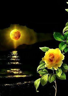 Moon Photos, Moon Pictures, Sunset Photos, Orange Wallpaper, Flower Wallpaper, Rose Images, Flower Images, Beautiful Moon, Beautiful Roses