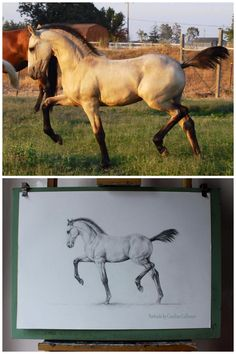 """Warlander """"Abacus Xanto,"""" bred by Holly Zech, owned by Martha Gantsoudes, and drawn here by Caroline Collinson in May 2014 based on a photo taken by Holly Zech in August 2008--when Xanto was just four months old!"""