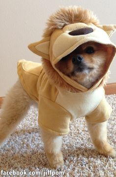 This Is The Cutest Dog You'll See This Halloween (via BuzzFeed)