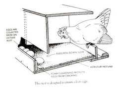 Building a Chicken Coop - Roll away nesting box for egg eaters. Building a chicken coop does not have to be tricky nor does it have to set you back a ton of scratch. Chicken Barn, Best Chicken Coop, Backyard Chicken Coops, Chicken Coop Plans, Building A Chicken Coop, Chicken Runs, Chickens Backyard, Chicken Tractors, Small Chicken