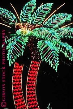 Neon palm trees baby!