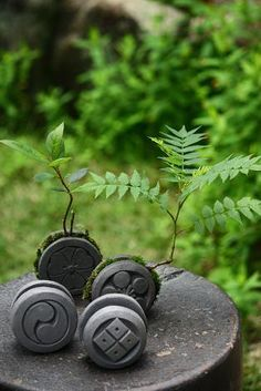 Need Japanese Garden Ideas? To bring birds to your garden, add plants that will naturally attract them. One of the best plants for attracting birds are sunflowers. Moss Plant, Fern Plant, Garden Terrarium, Succulent Terrarium, Japanese Plants, Garden Swimming Pool, Mini Bonsai, Miniature Trees, House Ornaments