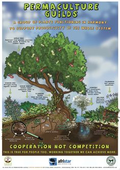 Forest gardening primarily involves allowing natural relationships to establish. By directing the various partners of these relationships we can realise a huge diversity of benefit for us and our surroundings.