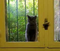 ♥ BlACk CÅt§ in =^.^= the window