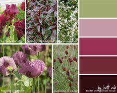 iris, penstemon, gypsophila, papaver, sanguisorba
