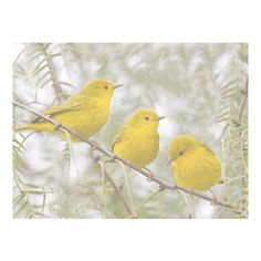 60% T yellow winter birds gimpshop stuff ❤ liked on Polyvore featuring bird