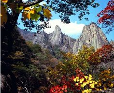 It's the most beautiful season for autumn color leaves. Beautiful Scenery, Most Beautiful, Korea Tourism, Supernatural Beings, Dartmoor, Delphinium, Vacation Destinations, Picture Photo, Great Places