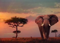 Kenya is one of the most popular safari destination in Africa. Here are the top 10 wildlife parks and reserves in Kenya. Elephant Facts, World Elephant Day, Asian Elephant, Elephant Baby, Giraffe, National Elephant Day, Wildlife Day, Nature Sauvage, Nature