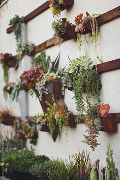 A wall garden with a variety of succulents.