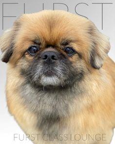 Luxury Spa, Dog Grooming, Photo Galleries, Gallery, Roof Rack