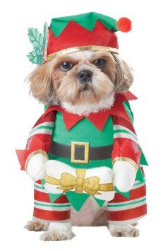 72 Best Christmas Dog Costumes Images Dogs Pets Christmas Animals