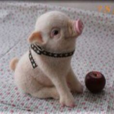 this little pig is adorable!