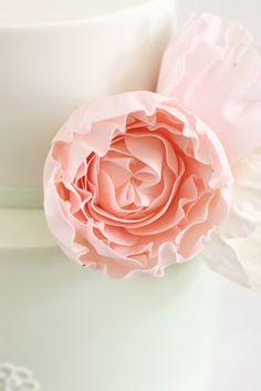 hello naomi  david austin dusty pink