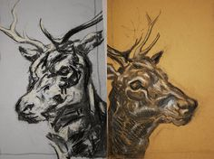 nicola hicks drawings - Google Search Parcel Paper, Observational Drawing, White Chalk, Animal Sketches, Creature Feature, Natural Forms, Deer, Moose Art, Freedom