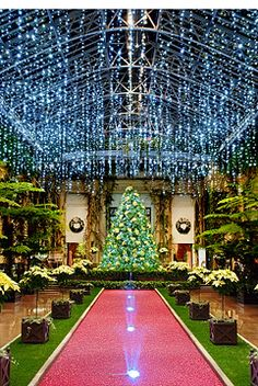 Half a million twinkling lights, thousands of poinsettias, and ...