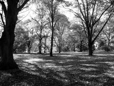 Forest in the Arnold Arboretum, Jamaica Plain, MA.  http://marcphotogallery.com/arboretum-forest.html