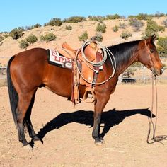 5 Year Old Cowhorse Gelding for Sale - For more information click on the image or see ad # 40775 on www.RanchWorldAds.com