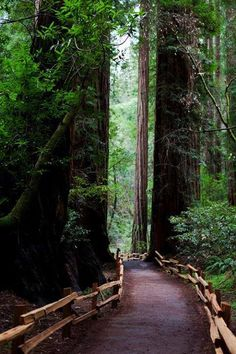 Redwoods, Muir Woods, California  I've been here before, and it is so beautiful and peaceful.