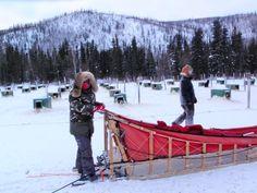 Arctic-style-Dog-Sledding