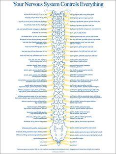 your-nervous-system.jpg (736×981)