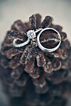 Rings on a pinecone! #wedding #inspiration #details #decor #winter #pinecone #ring