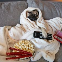 Pug TV night