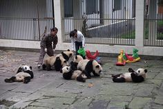 2010 10 05 Ya'an Bi Feng Xia Base of CCRCGP Panda Kinderga… | Flickr