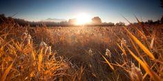 Fields Landscapes Nature